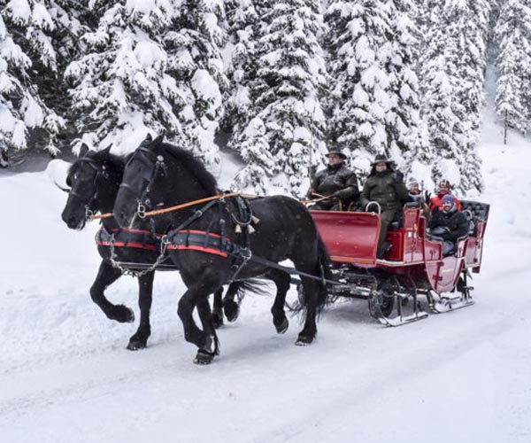 Horse Sleigh riding